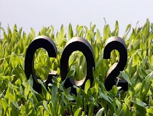 Crédito de carbono pode ser 'pior do que não fazer nada' contra desmatamento, aponta ProPublica
