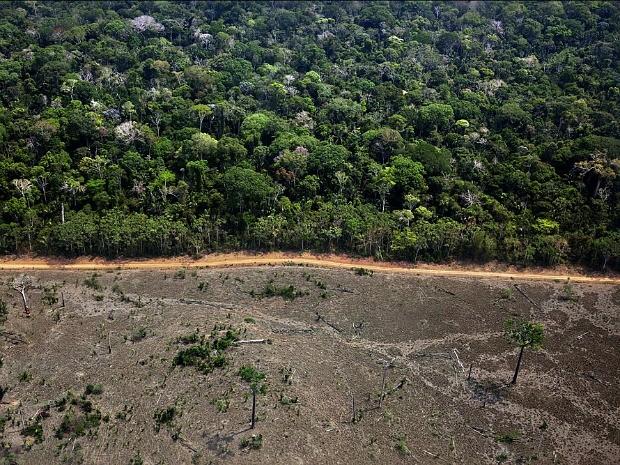 Área de desmatamento no município de Lábrea, no sul do Amazonas (Foto: Greenpeace / Marizilda Cruppe)