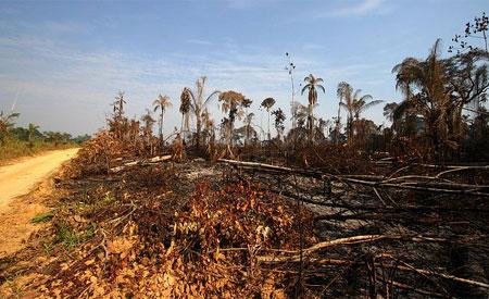 Desmatamento na Amazônia aumenta 6% em um ano, aponta Imazon
