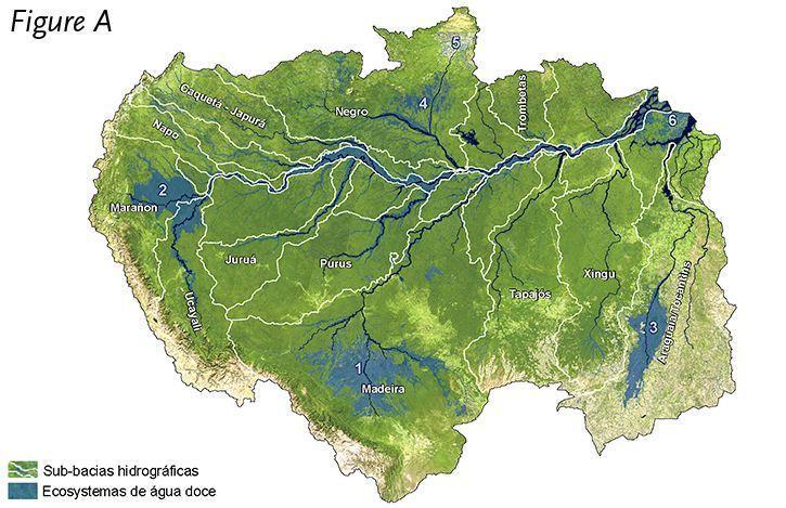 Estudo aponta que ecossistemas de água doce da Amazônia são vulneráveis à degradação ambiental