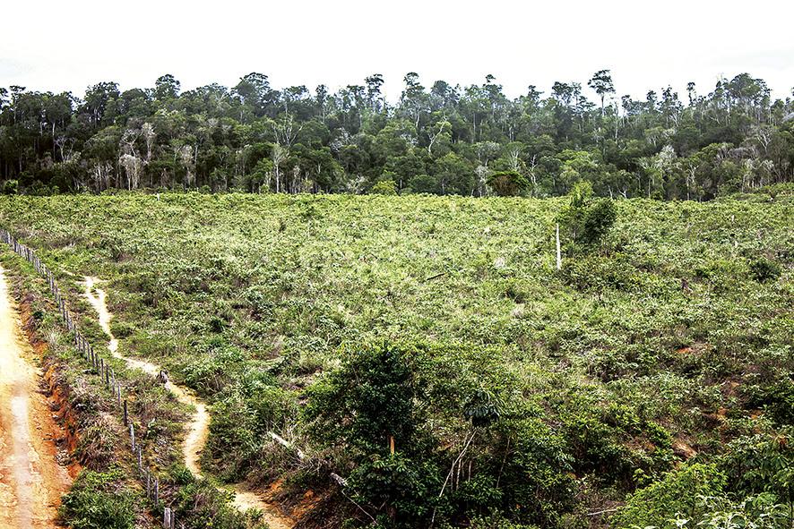 País perdeu 7,5% de suas florestas entre 2000 e 2016