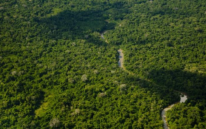 Vista aérea da floresta amazônica no Alto Rio Catrimani, Terra Indígena Yanomami,divisa dos estados de Roraima e Amazonas Edson Sato
