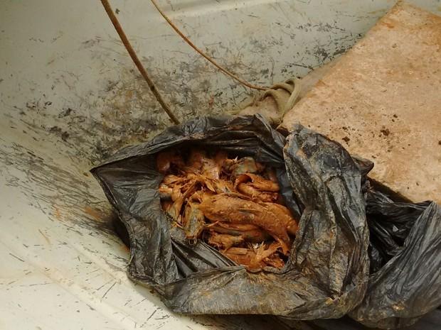 Peixes foram achados mortos próximo a hidrelétrica no Amapá (Foto: Divulgação/Imap)