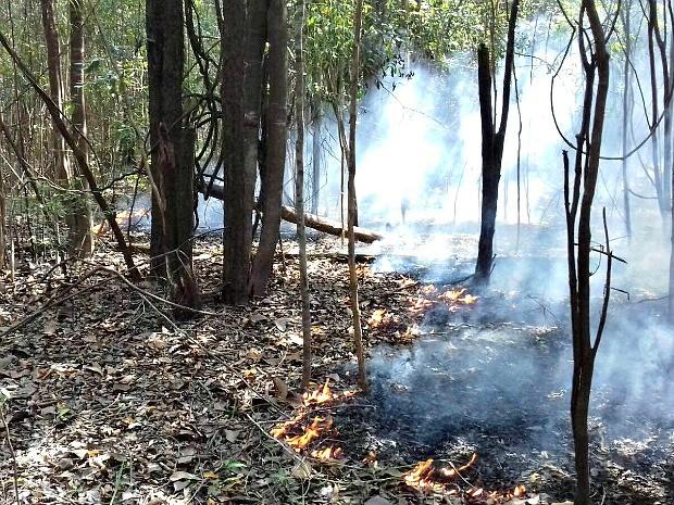 Segundo a Defesa Civil, chamas duram cerca de dez dias (Foto: Divulgação/ Defesa Civil)