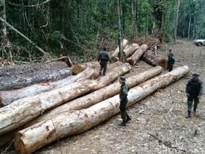 Reserva Guariba Roosevelt: desmatamento avança no noroeste de MT (Foto: Fiscalização/Divulgação)