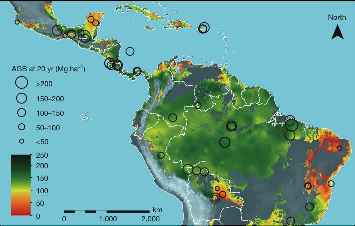 Imagem mostra velocidade de regeneração, medida em biomassa acumulada em 20 anos. Quanto maior o círculo preto, maior a taxa de crescimento da floresta