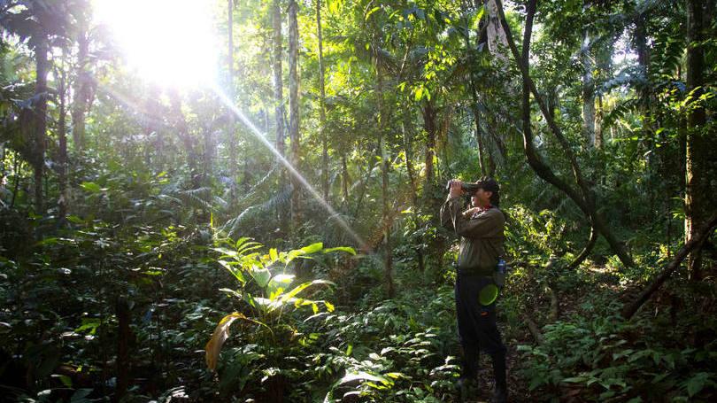 Amazônia: Faltava saber como foi que milhares de índios encontravam sustento no local