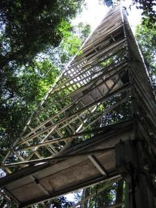 torre monitoramento amazônia
