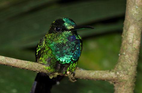 Diferentes espécies foram encontradas e catalogadas para evitar a extinção (Haroldo Palos Jr/Divulgação)