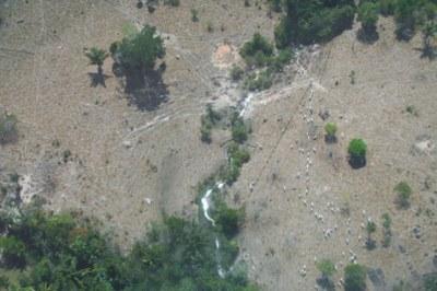 Desmatamento em Novo Progresso (imagem: Ibama)