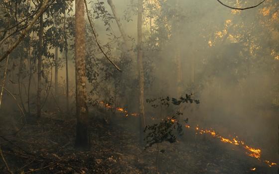 Incêndio na floresta amazônica, na região de Paragominas, Pará (Foto: Adam Ronan/Divulgação)