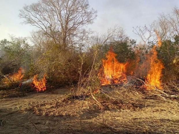 Florestas na Amazônia demoram sete anos para recuperar funções pós-fogo