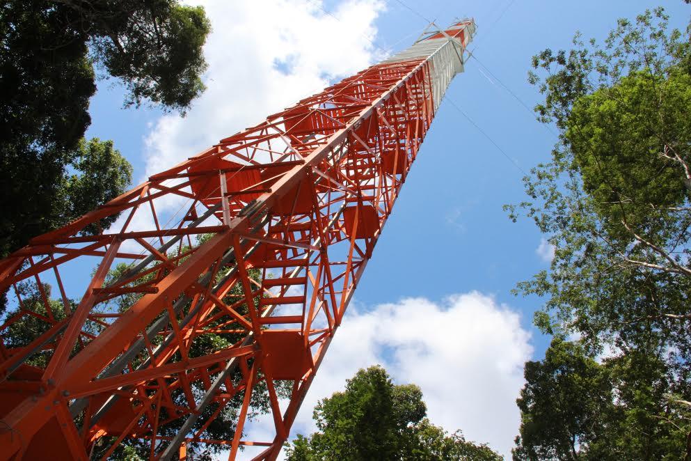 Pesquisadores usam torre na Amazônia para investigar relação da floresta com o clima global