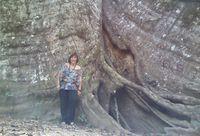 """Mara Régia e a árvore conhecida como """"Muralha da Amazônia""""Mara Régia e a árvore conhecida como """"Muralha da Amazônia"""" arquivo pessoal"""