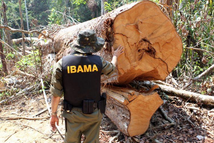 """Agromitômetro: verdades e mentiras sobre a """"indústria da multa ambiental"""""""