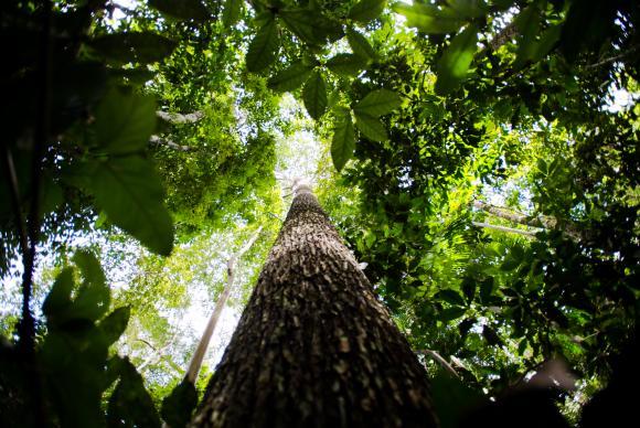 Quantidade de carbono armazenado nas florestas é reduzida à medida que o clima se aquece