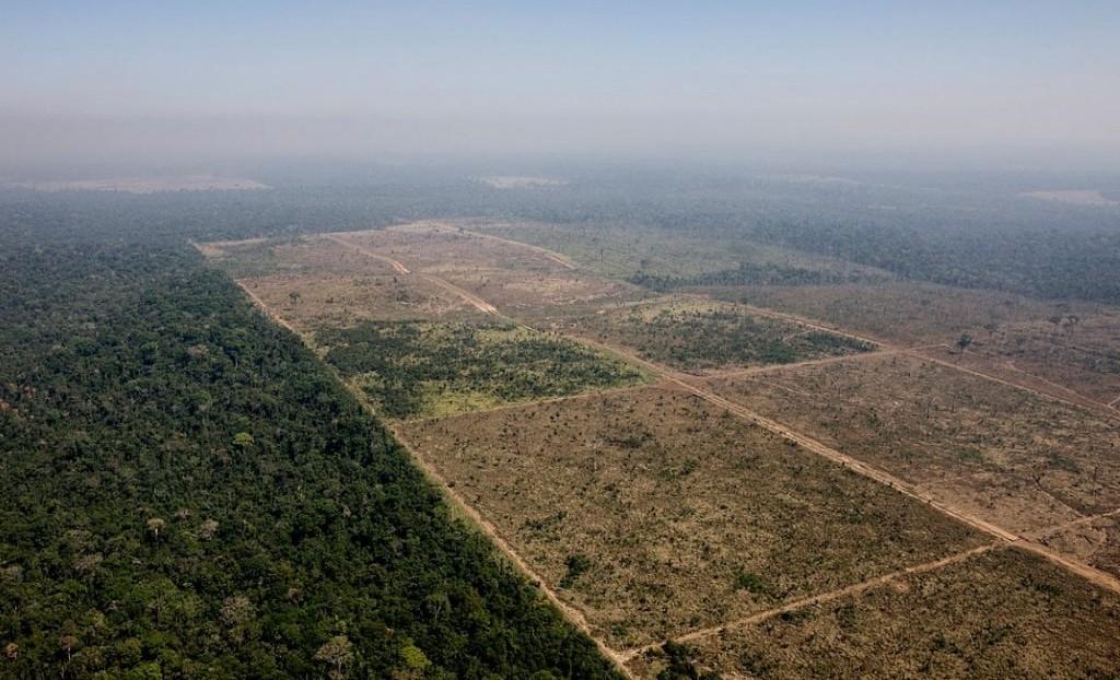 Alta no desmate coroa desmonte ambiental de Bolsonaro e Salles