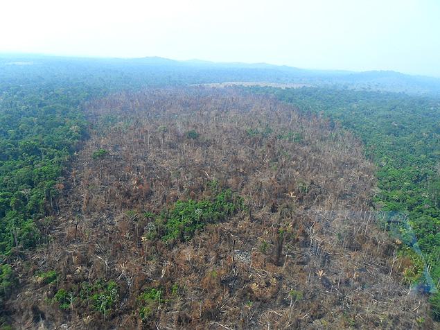 Monitoramento do Imazon confirma tendência de alta do desmatamento da Amazônia