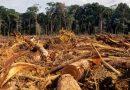 Amazônia está sendo transformada em Cerrado, diz Carlos Nobre