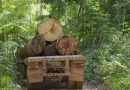 Presidente da Fundação Renova é denunciado pelo Ministério Público por comércio ilegal de madeira na Amazônia