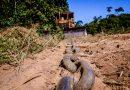 Vilão do desmatamento ilegal, correntão é vendido na internet com dicas para evitar fiscalização