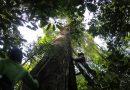 'Amazônia é totalmente estratégica para nossa sobrevivência enquanto espécie'.  Entrevista especial com Marcela Vecchione