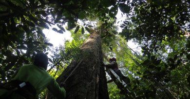 Estudo internacional conclui que mudanças climáticas estão matando árvores na Amazônia