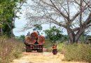Desmatamento ameaça áreas protegidas da Bacia do Rio Xingu