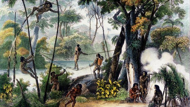 Mortes no rio, acesso de loucura, ataque de onça: conheça a expedição que deu origem ao Herbário do Museu Nacional