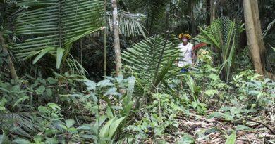 Centenas de invasores entram na Terra Indígena Uru-Eu-Wau-Wau e preparam derrubada da floresta