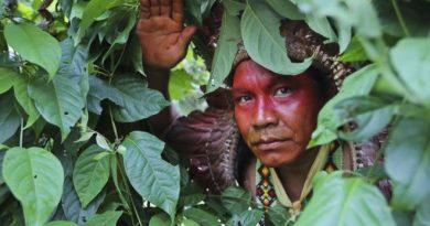 Da escravidão à autonomia em 50 anos: a história de renascimento dos índios yawanawá