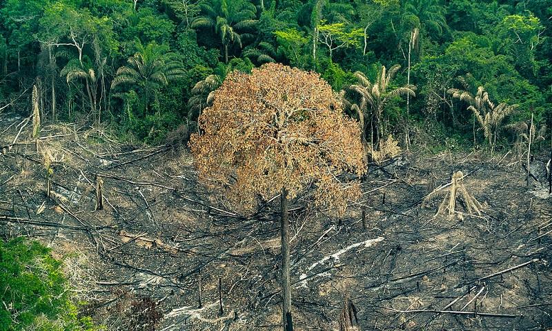 Como os estados cuidam da Amazônia: comparamos dados de proteção, orçamento e desmatamento