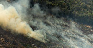 Sociedade Civil apresenta 5 medidas emergenciais para combater o desmatamento na Amazônia