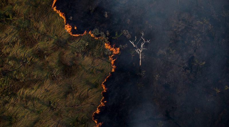 """""""Bolsonaro é o Nero dos incêndios na Amazônia"""", diz ambientalista Felipe Milanez"""
