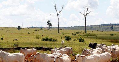Greenpeace Internacional publica relatório apontando o impacto climático da indústria da carne