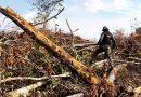 Bancos pedem fim do desmatamento, mas financiam desmatadores