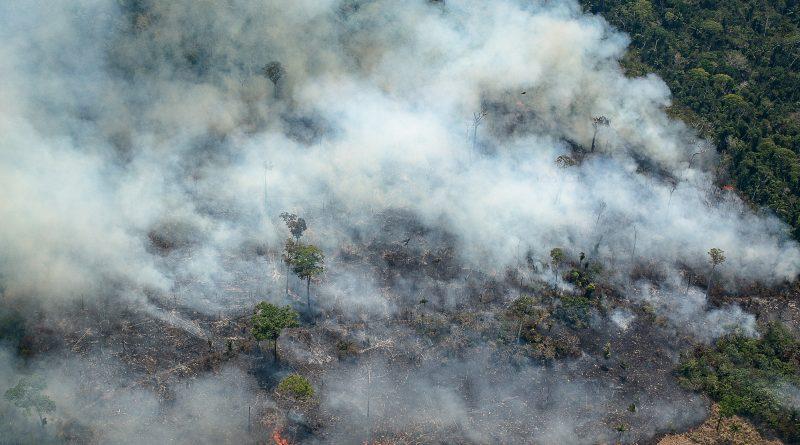 O que acontece com plantas e animais quando a Amazônia queima?