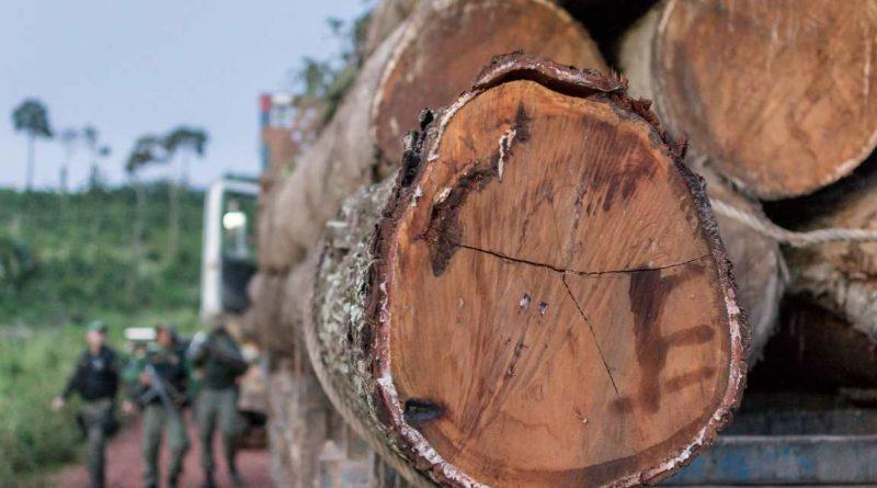 GPS natural ajuda a desvendar crimes ambientais