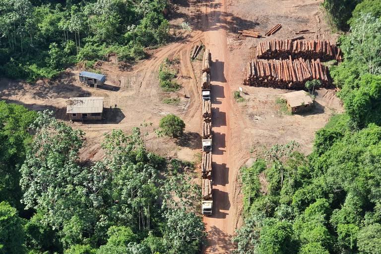 Após críticas de Salles chefe da Polícia Federal no Amazonas diz que não vai passar boiada