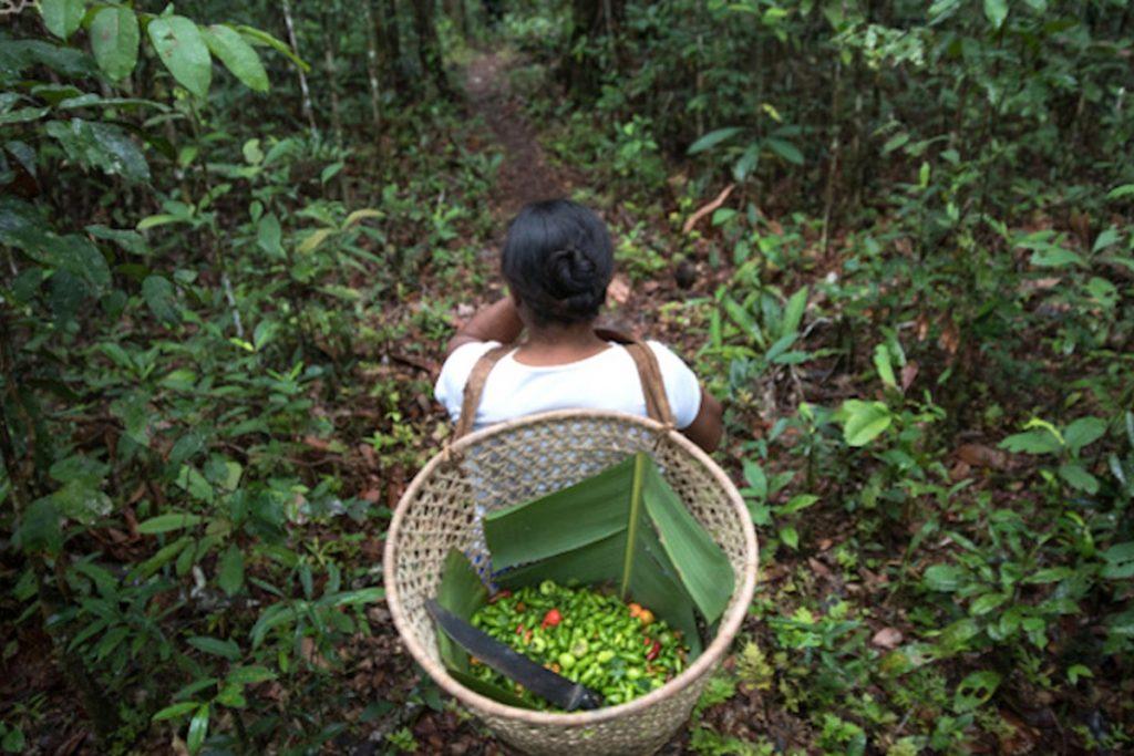 A bioeconomia como oportunidade para enfrentar as mudanças climáticas. Entrevista especial José Vitor Bomtempo