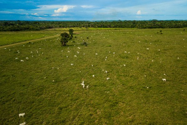 Ruralistas querem aprovar projeto que prioriza uso agropecuário da água e permite desmatamento
