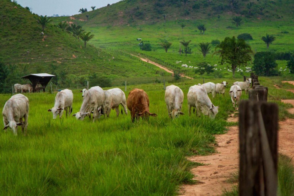 Área de pasto cresceu 200% na Amazônia nos últimos 36 anos